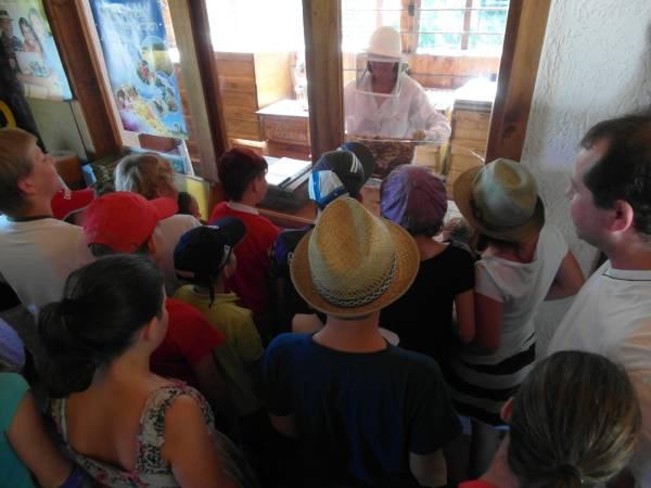 Kinder lernen die Arbeit der Bienen kennen